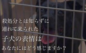 動物愛護支援コース 3