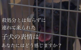 動物愛護支援コース 4