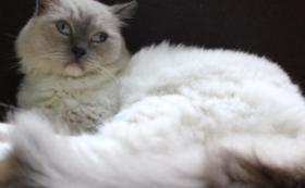 【来店して応援!】保護猫カフェお試しコース