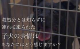 動物愛護支援コース 5