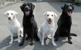 ①【税額控除対象】盲導犬応援コース(3,000円)
