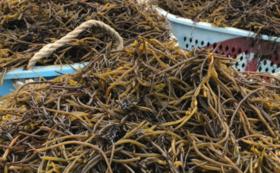 漁師が育てた海産物2点セット(とろろ・ひじき2)