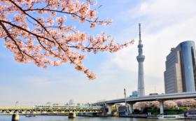 お花見チケット@隅田川の千本桜