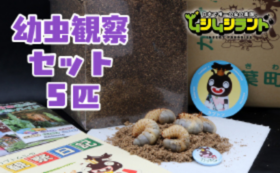 【ムシムシランドおうえん】カブトムシ幼虫観察セット