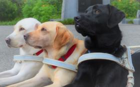 ③【税額控除対象】盲導犬応援コース(30,000円)