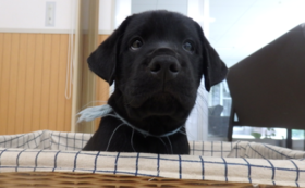 ②【税額控除対象】盲導犬応援コース(10,000円)