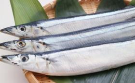 いわき秋刀魚祭りツアーにご招待