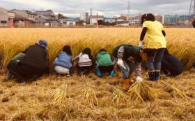 たんぼラグビー「稲刈り体験ペア参加券」セット