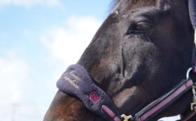 6, -引退馬余生の一つの形づくりを-全力応援コース