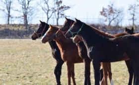 8, -引退馬余生の一つの形づくりを-全力応援コース