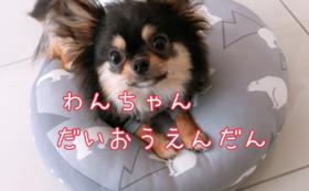 【大応援団】コース