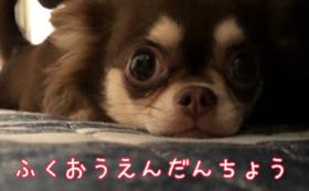 【副応援団】コース