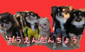 【わんちゃん応援団長】コース