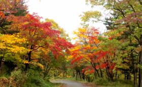 【リターン不要!】層雲峡「紅葉谷」を特別応援コース