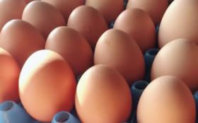 卵の食べ比べセットを毎月お届け