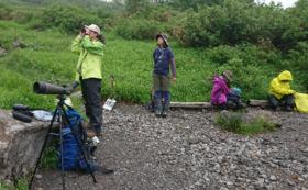 高原温泉ヒグマ生態観察ツアー