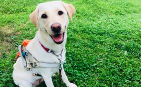 ④【税額控除対象】盲導犬応援コース(50,000円)