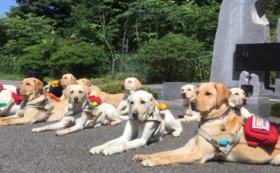 ⑤【税額控除対象】盲導犬応援コース(100,000円)