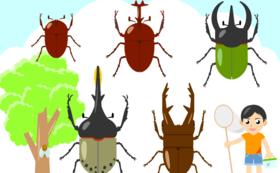 幼虫引き換え(5匹)チケットコース