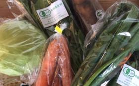 【おすすめ】旬の無農薬野菜セット