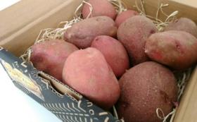 【カラフルジャガイモで応援!Bコース】