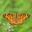 認定NPO法人 日本チョウ類保全協会