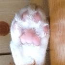 こたつネコ