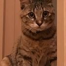 保護猫ミルちゃん