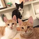 うにむぎはちむーの保護猫シェルター
