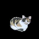 保護猫カフェ あんちゃん