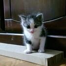 k.kitten