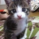 nico.the.cat