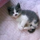 23匹の猫の会 山口ベリー