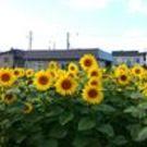 渡辺 明日香