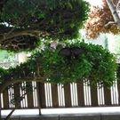 内山 直樹