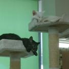 一般社団法人 愛知保護猫譲渡推進室