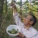 Yoshihiko  Miyazaki