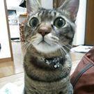 澤 美智子