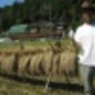 Syogo Nonomura