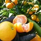 宇和島市かんきつ農家復興支援プロジェクト