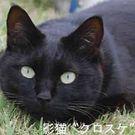 鎌田 秀夫