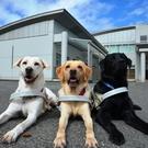 公益財団法人 東日本盲導犬協会