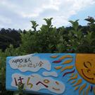 NPO法人 山の遊び舎はらぺこ 理事 木下真紀 (保護者)