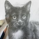 猫のためのパトロール隊員