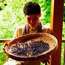 自家焙煎珈琲豆 マキノコーヒー