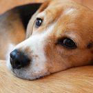 ペット多頭飼い大歓迎の賃貸住宅情報Pet Love Home