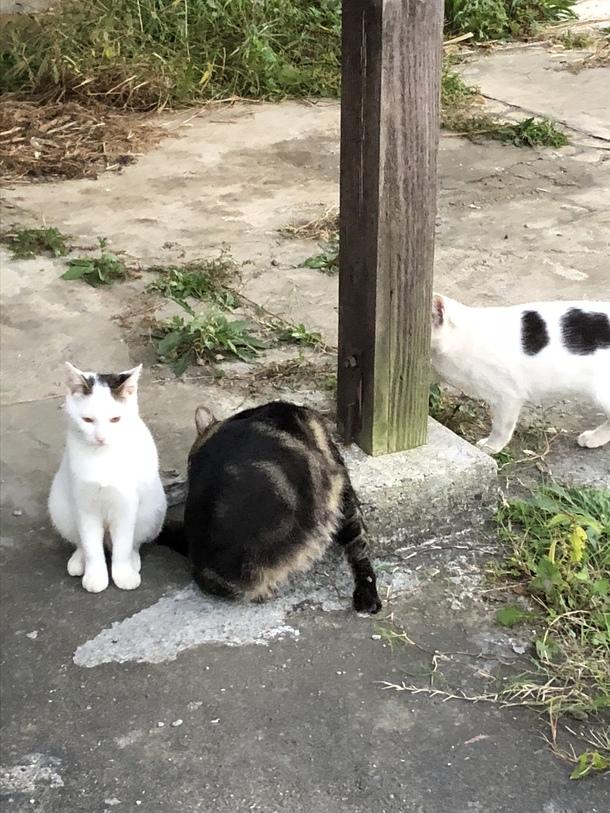 猫 罠にかかる